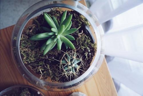 Comment Se Faire Un Terrarium De Cactus A La Maison Nerds
