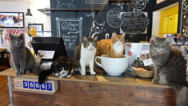 cafe-chat-2