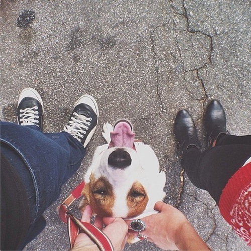 promenade-chien