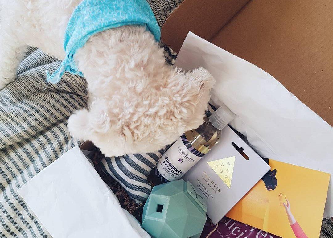 Hellodawg, un coffre aux trésors pour chien | NERDS
